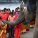 elephant blessings, kangipuram