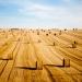 wheat rolls - france